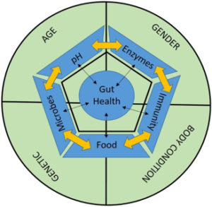 gut-health-cycle