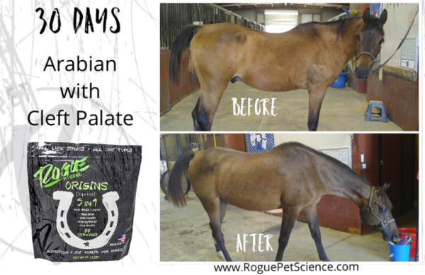 Arabian Horse With A Cleft Palate That Took Origins Equine 5in1 And Improved Their Health