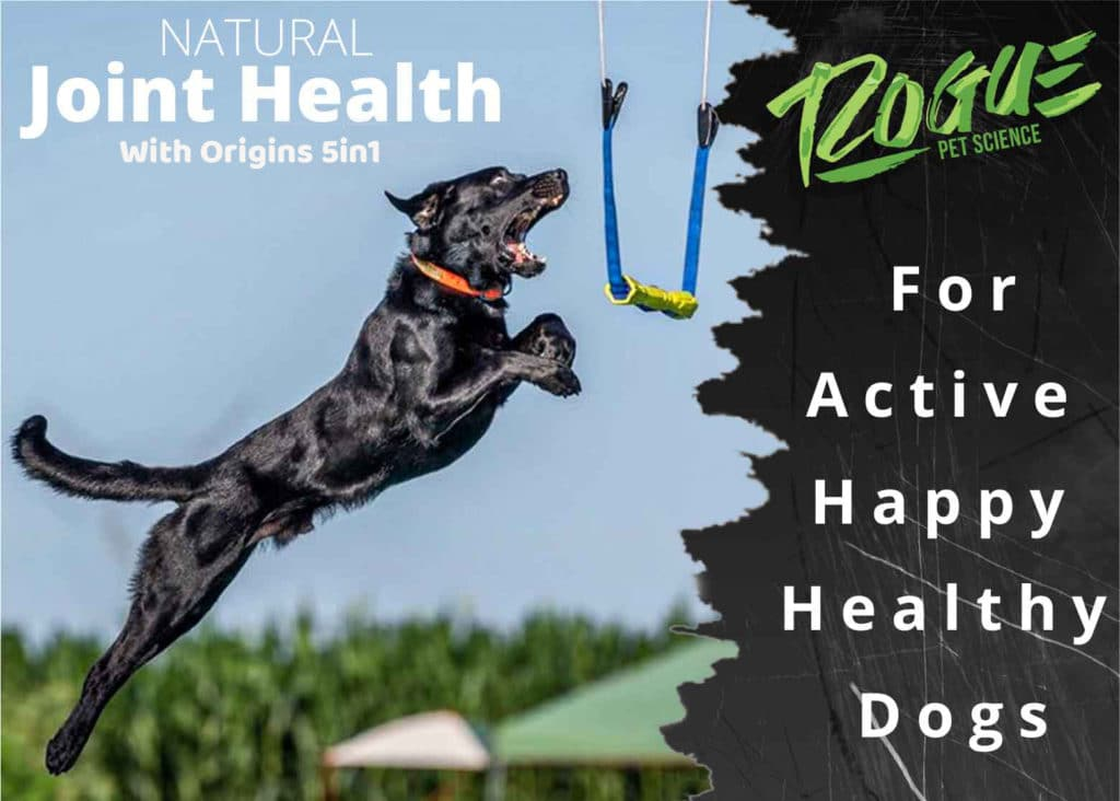Dock Diving Dog using Origins 5in1 For Great Joint Health