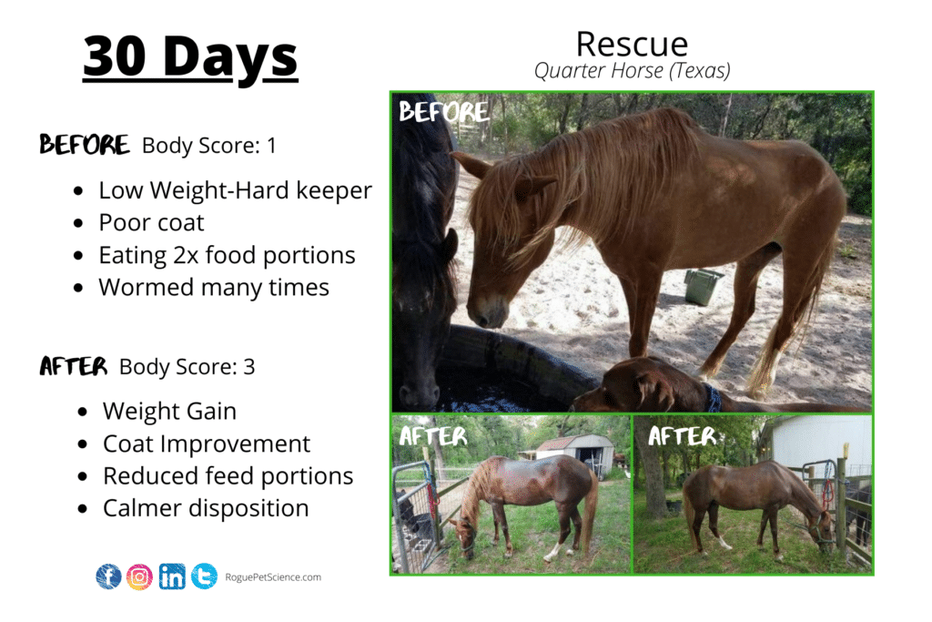Origins Equine 5in1 Increases Weight Gain For This Horse