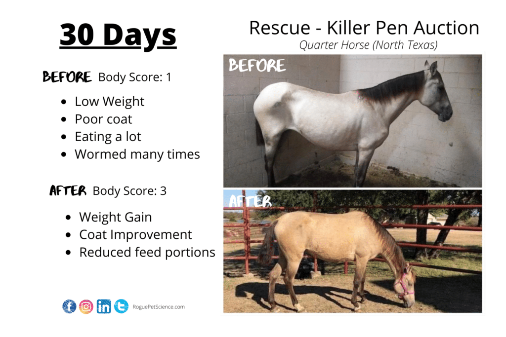 Origins Equine 5in1 Helps Rescue Horse