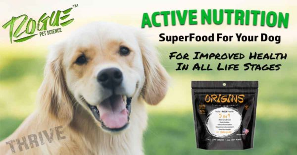 Golden Retriever with Origins 5in1 From Rogue Pet Science
