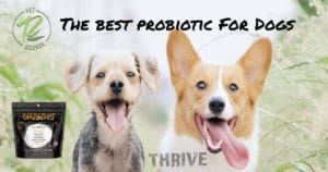 Happy Healthy Dogs Use Origins 5in1