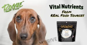 Vital Nutrients For Your Dog Need To Come From Real Food Sources