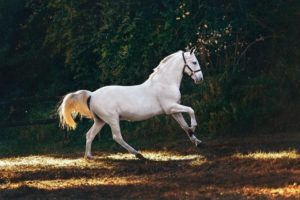 Rogue Pet Science: A Complete Guide to Gastric Ulcers in Horses