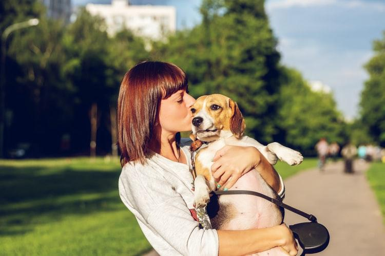 Improving your dog's digestion will improve their quality of life.