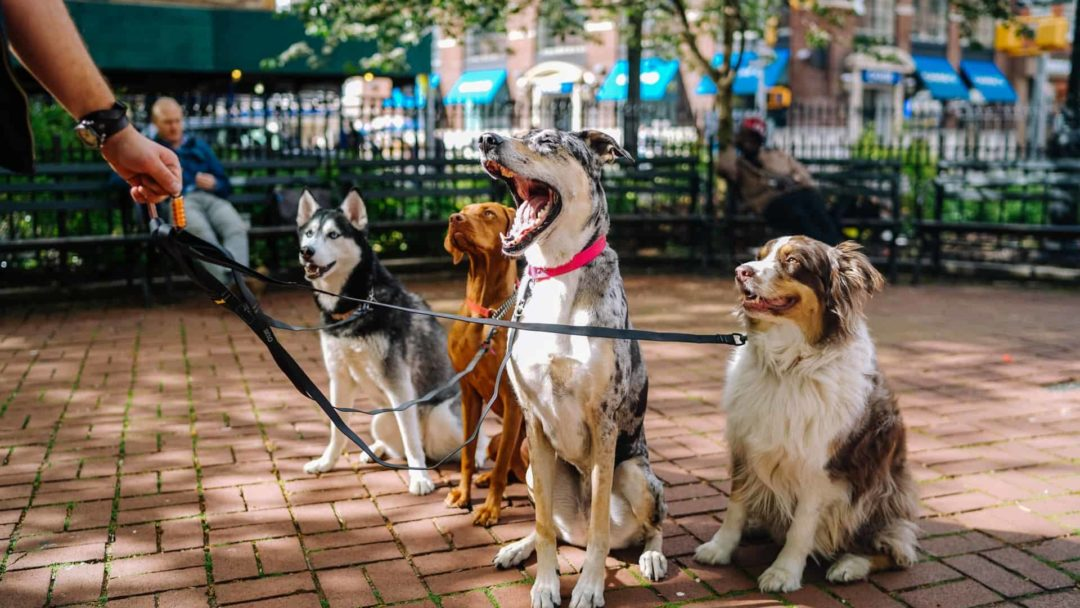 Healthiest Dog Breeds On Leash In Park