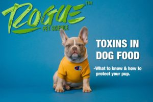 Toxins in dog food featured image