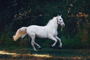 The most common horse coat colors
